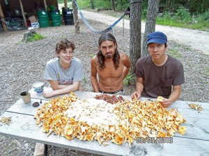 Wild chanterelle and oyster mushroom harvest