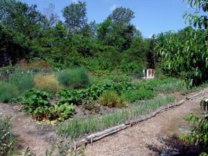 garden-6-18-14