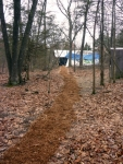 Cedar chip mulched path to common house