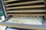 Trays of bananas going into the dehydrator