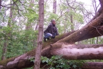 Bobbie climbing on an sycamore trunk