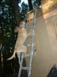 Kita climbing ladder for a burrito