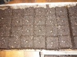 Pepper seeds in the soil block indentions